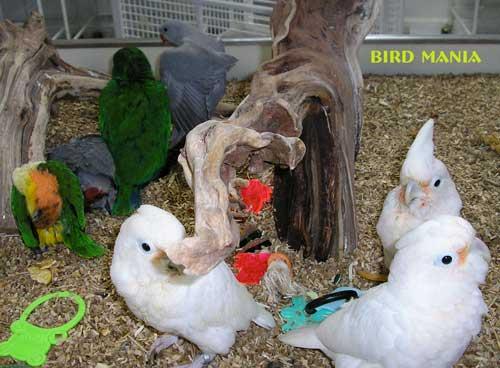 Bird Mania - Home